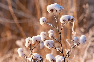 Winter in Close up von Brian Morgan