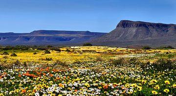 Blumenfeld von Corinne Welp