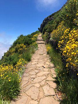 Pico de Areiro van Shirin Marapengopie