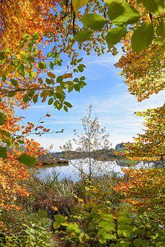 Paysage d'automne au lac d'Egglburg sur Susanne Bauernfeind