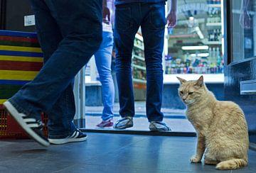 Shopcat, Amsterdam van Robert van Willigenburg