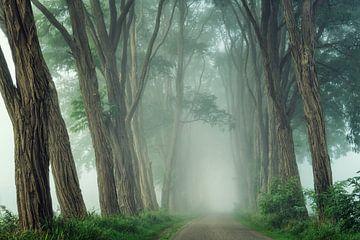 Akazien im Nebel von Martin Podt