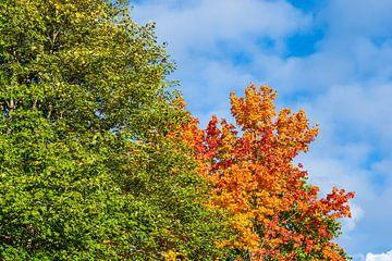 Blick auf herbstlich gefärbte Bäume in der Hansestadt Rostock von Rico Ködder
