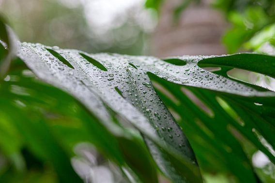 Waterdruppels op een groen blad. Close-up met zachte onscherpe randen. Levendige groene kleuren acht