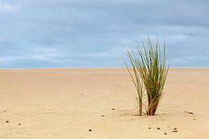 Gras in het zand