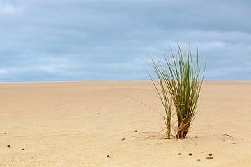 Gras in het zand van Marcel Derweduwen