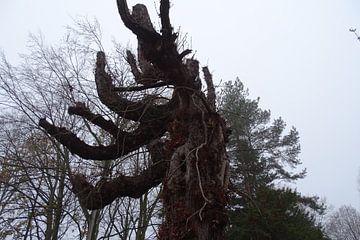 fraaie boomstronk van David Van der Cruyssen