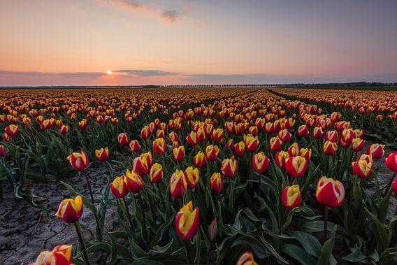 Typische Nederlandse tulpenvelden - rode/gele tulpen van Thijs van den Broek