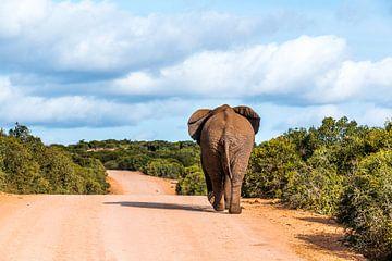 Addo Elefantenpark Südafrika von Annette van Dijk-Leek