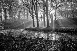 Stralende dag in het bos van Michel van Kooten