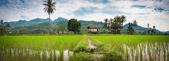 Breed panoramisch landschap met rijstvelden, Noord Laos