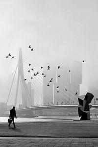 Misty Morning - Erasmusbrücke im Nebel