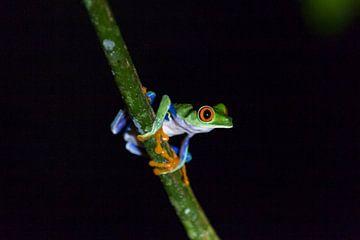 Frosch im Dunkeln von Van Renselaar Fotografie