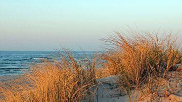 Abendsonne im März van Ostsee Bilder