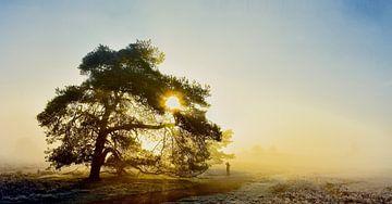 Natuurreservaat de Renderklippen von Vincent van Wijk
