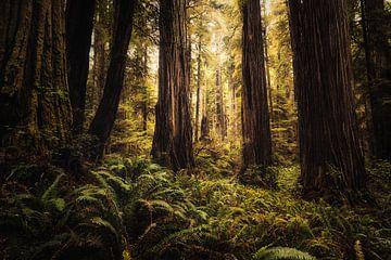 Das Herz des Waldes von Joris Pannemans - Loris Photography