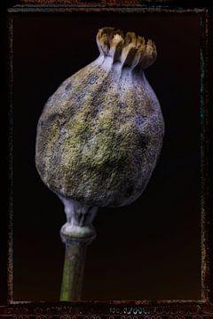 Oude Bloemen 10 van Henk Leijen