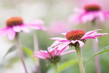 Roze bloemen in volle bloei van Evelien Oerlemans