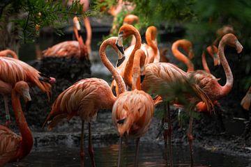 Flamingo's van gwen van Mossevelde
