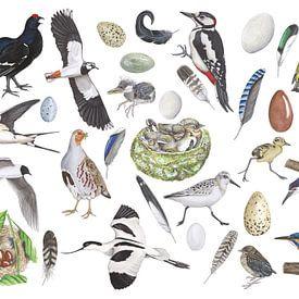 Het leven van vogels. van Jasper de Ruiter