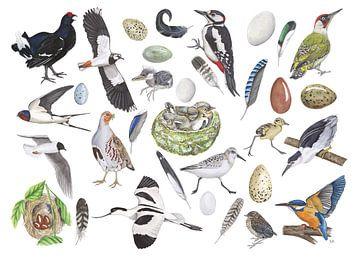 Das Leben der Vögel. von Jasper de Ruiter