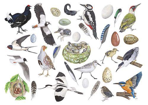 Het leven van vogels.