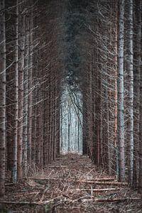 Wald von Steven Luchtmeijer