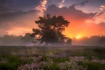 Een Dromerige Avond op de Nederlandse Heide von Albert Dros