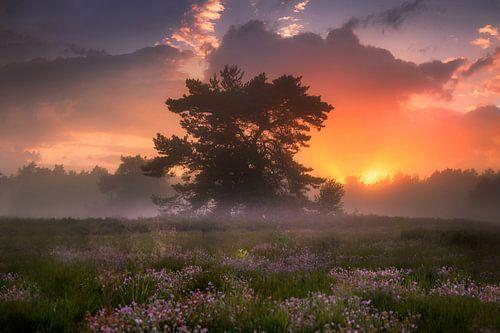 Een Dromerige Avond op de Nederlandse Heide van Albert Dros