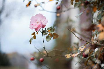 Blüte im Winter von Made By Jane