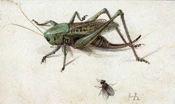 Ein Grashüpfer, unter dem eine Fliege, Hans Hoffmann