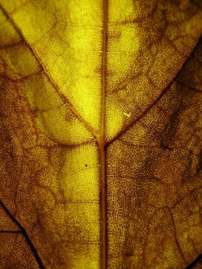 Goude herfst van Vectorific Design