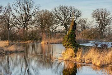Schöner Wintertag an der Empese und Tondense Heide von Cor de Hamer