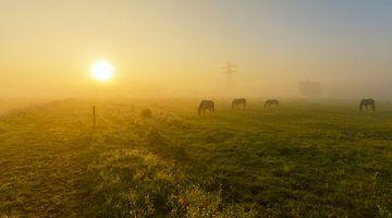 Paarden in mistig landschap von Remco Van Daalen
