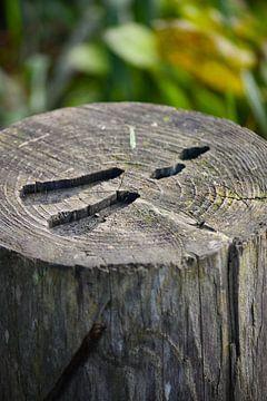 Voetafdruk van een hert in hout gegraveerd van Michelle de Haas
