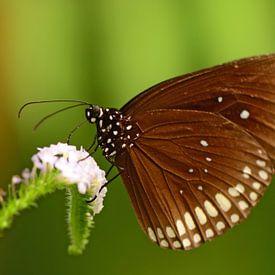 Bruine vlinder van Rene Mensen