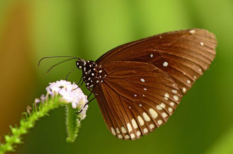 Bruine vlinder sur Rene Mensen