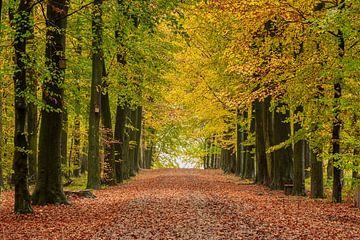 Herfst in het bos van Els Peelman