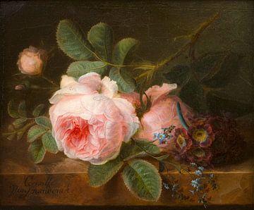 Koolroos, Cornelis van Spaendonck van