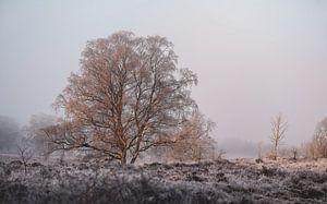 winterochtend op de heide van Tania Perneel