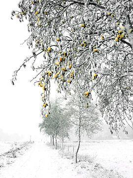 Winterse 'sferen' von Erna Kampman