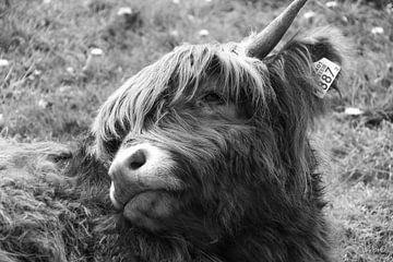 Gesicht der schottischen Highlander-Mutter in Schwarz und Weiß von Tina Linssen