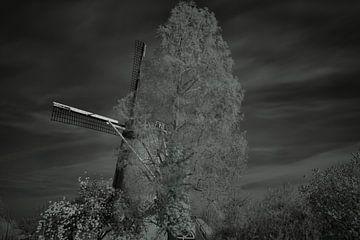 Infrarood in de natuur van JM de Jong-Jansen