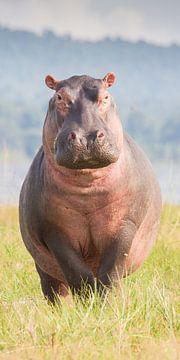 Natuur - Nijlpaard - Afrika Tanzania van Servan Ott