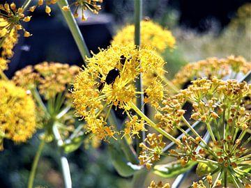 Kever in gele bloemen von Lisanne Rodenburg
