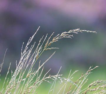 Wuivend gras van Ingrid Ronde
