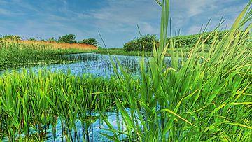 Rietland in de duinen van Digital Art Nederland