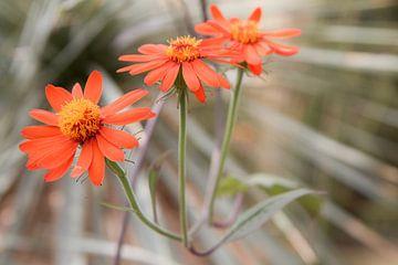 rode bloemen von Tessa Louwerens