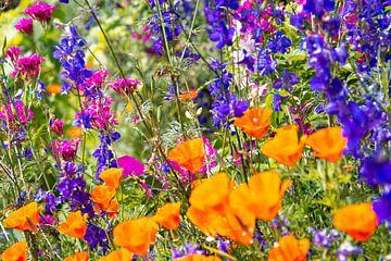 Buntes Sommerblumenfeld von Bianca ter Riet