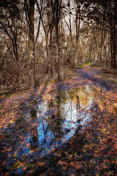 De herfst van het Beusebos van Jan van der Knaap